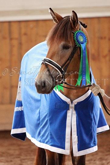 Veeran Tytteli sijoittui toiseksi 3-vuotiaiden laatuarvostelussa, ollen myös paras tamma ja lupaavin kouluhevonen. Kuva: Sini Tuhkunen