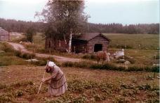 Savusauna, mummo ja hevonen - Hilda Anttila hoitaa kasvimaata