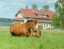 Liisuke ja Malmin Ilo. Kuva: Matleena Kervinen