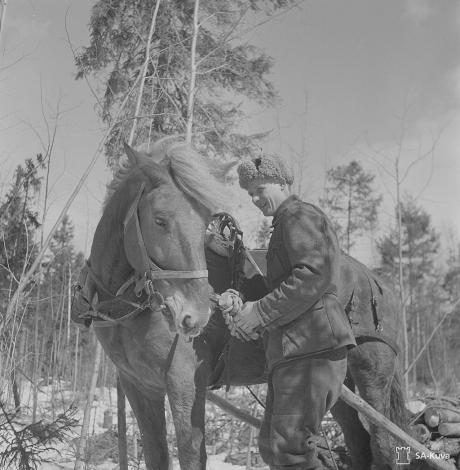 Kevättöihin rintamalla kuuluu telateitten korjaaminen. Kun uusia riukuja vedettiin hevosella työpaikalle, särkyi rahe. Hevonen seuraa kiinnostuneena rahkeen nopeaa korjausta. Syvärin voimalaitos 1944. SA-kuva.