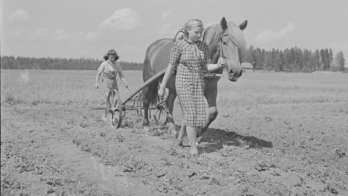 Tytt�ajamassa hevosharavaa