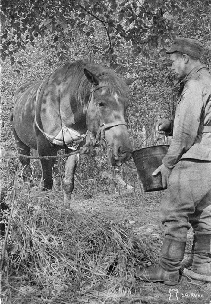 Kranaatin sirpaleesta haavoittunut hevonen.
